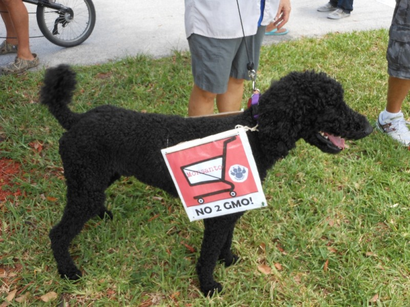 Dog Protests GMOs at March Against Monsanto