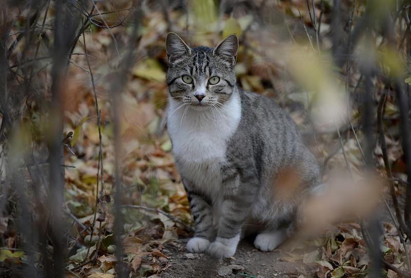 Free Roaming Cat