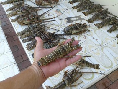 Resource Violation Arrests - Two Charged with Undersized Lobster Out of Season