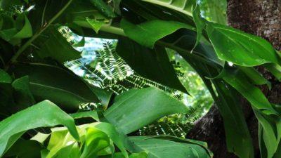 Rodger Stuart Davis Photography Exhibit at The Tropic