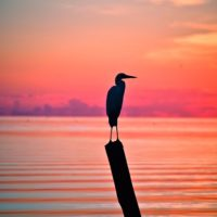 Connecting People with Nature: Third Annual Outdoor Fest to Showcase Florida Keys National Wildlife Refuges