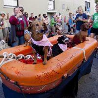 Annual Key West Dachshund Walk isSunday, December 31