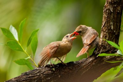 Florida Keys National Wildlife Refuges Photo Club Meeting:Wed. Nov. 8th
