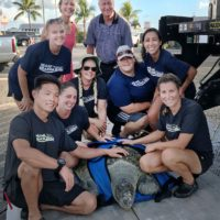 Long-Captive Green Turtle Released in Florida Keys National Marine Sanctuary