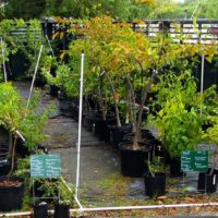 Nov. 11th Plant Sale at KW Tropical Forest & Botanical Garden