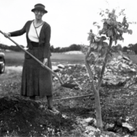 Key West Botanical Garden Society GRAND RE-OPENING,December 2nd