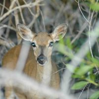 Community Assistance Opportunity to Help Florida Keys Wildlife