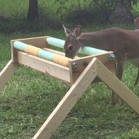 National Key Deer Refuge Establishes Medication Stations for Backcountry Key Deer Population