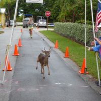 FAVORite Events of the Florida Keys National Wildlife Refuges- Run with Deer 5K