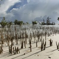 FAVORite Images of the Florida Keys National Wildlife Refuges: Photo Contest and Pop-up Exhibit Announced