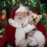 All Animal Clinic Sponsors Pet Pictures with Santa at the Historic Seaport