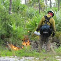 National Key Deer Refuge Upcoming Prepwork for Start of 2017 Prescribed Burn Season