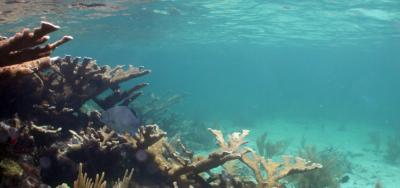 31st Annual Reef Relief Membership Meeting, July 16th