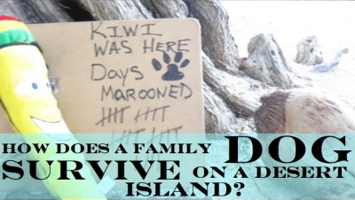 MAROONED! How Does a Family Dog Survive on a Desert Island?