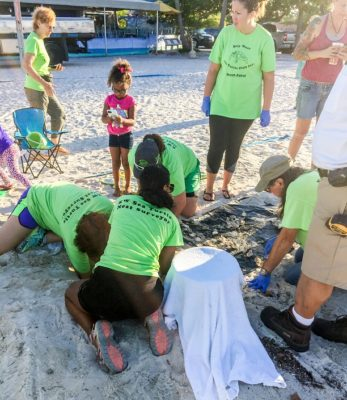 Baby Turtles Hatch on Higgs Beach in Key West for First Time in 3 Decades
