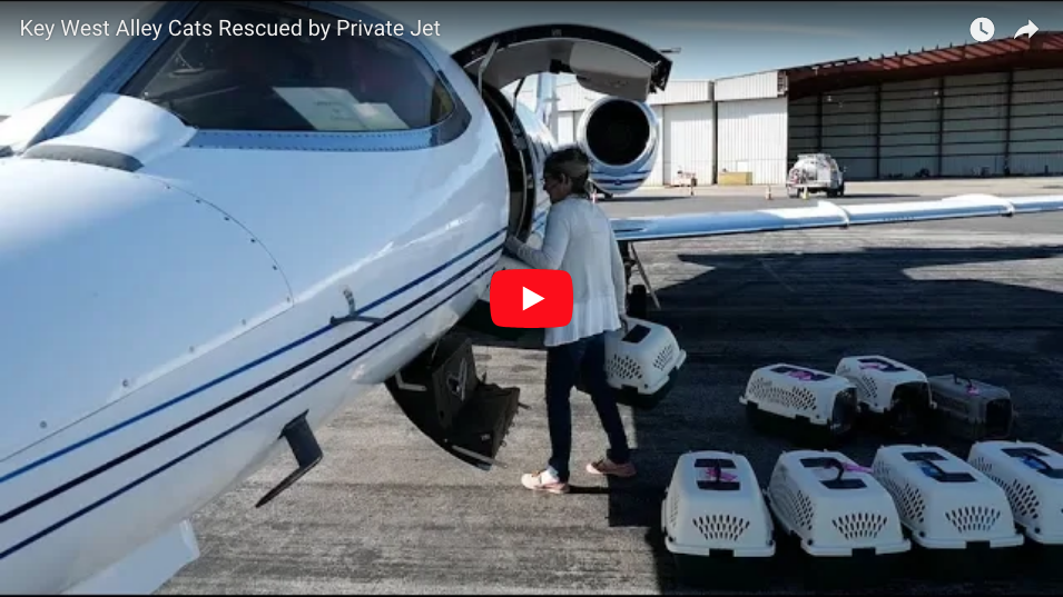KEY WEST ALLEY CATS RESCUED IN A PRIVATE JET...