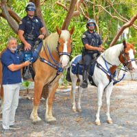 Horse Donated to KWPD Mounted Unit