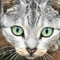 Caroline Street Cat Colony in Jeopardy - Can you Foster or Adopt? Urgent Need...