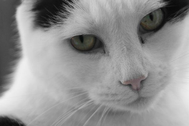 cat-331299607100Xgh