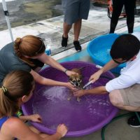 Dog Wash Raises Money for SPCA