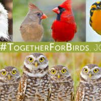 Conservation Groups and Citizens Tell Congress: 'We Stand Together for Birds'