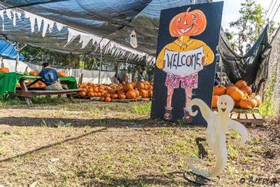 Marc House Pumpkin Patch