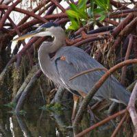 Florida Keys National Wildlife RefugesPhotoClubMeeting:Wed. Dec 13th, 2017