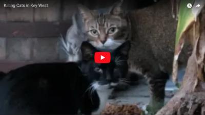 Killing Cats in Key West