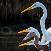 Unique Birding and Nature Opportunities at the Florida Keys National Wildlife Refuges