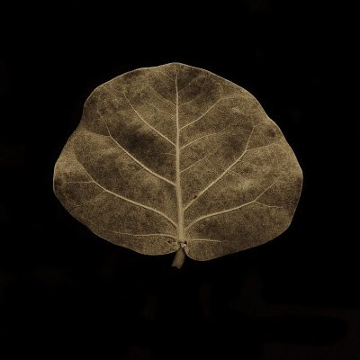 Last Chance to See Tropical Botanical Photographs by Nancy Spiewak at SALT Gallery