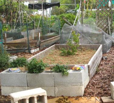 Plot at Community Garden