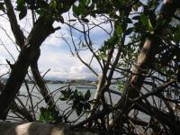 Wisteria Island Ownership Case Update
