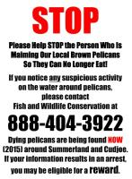 Please Help STOP Person Maiming Pelicans