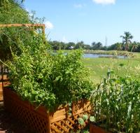 AQUAPONICS IN THE KEYS