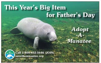 No Time to Celebrate:Manatees' Future Far from Certain