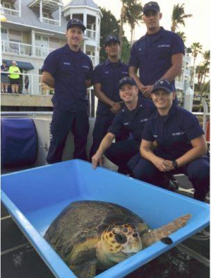 Coast Guard, Turtle Hospital Crews Release 150-Pound Loggerhead Sea Turtle Near Key West