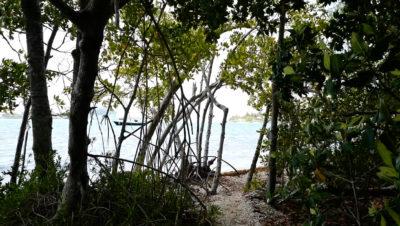 Wisteria Island: Fake News Alert!