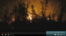 wisteria fire